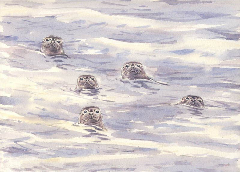 Inquisitive Common Seals