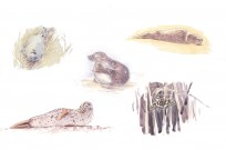 Various sketches from 'The Long, Wild Shore'