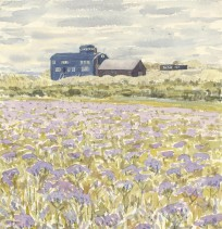 Lifeboat House and Sea-lavender
